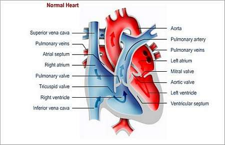 Department of cardiothoracic surgery university of the free state the valve between the right atrium upper right heart chamber and the right ventricle lower right heart chamber is missing and there is diminished ccuart Gallery